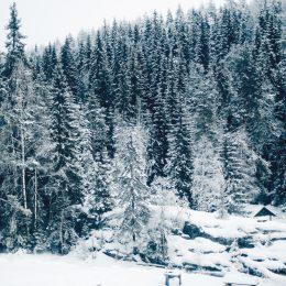 рускеала новый год 3